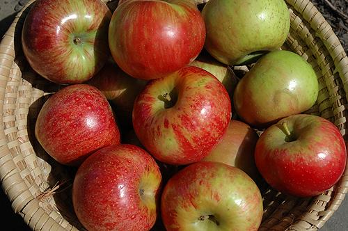 basket_O_apples