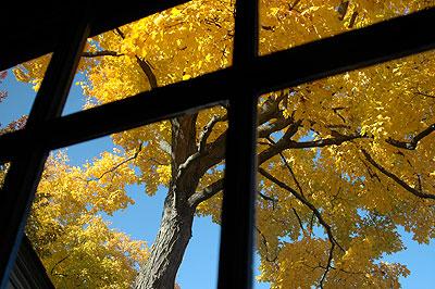 kitchen_window_leaves