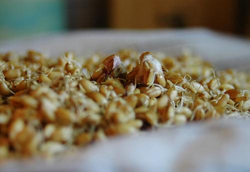 moldedwheat