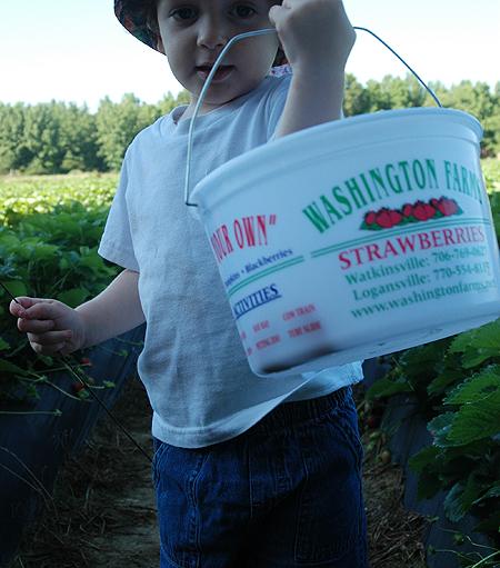 strawberries_pickin